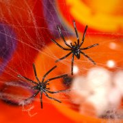Toile d'araignée avec 4 araignées
