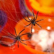 Toile d'araign�e avec 4 araign�es