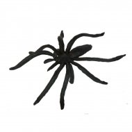 8 Bagues Araignée