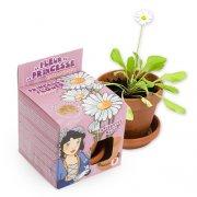 Fleur de Princesse, P�querette