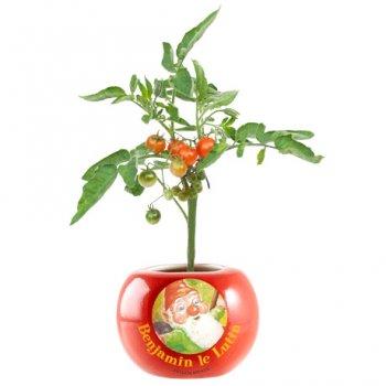"""Mini-kit de plantation """"Tomate cerise Bio"""""""