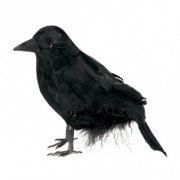 Petit Corbeau d'Halloween