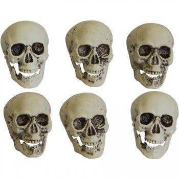 Lots de 6 Crânes squelette