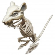 Squelette Rat