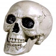 Tête de Mort Mâchoire Mobile (20 cm)