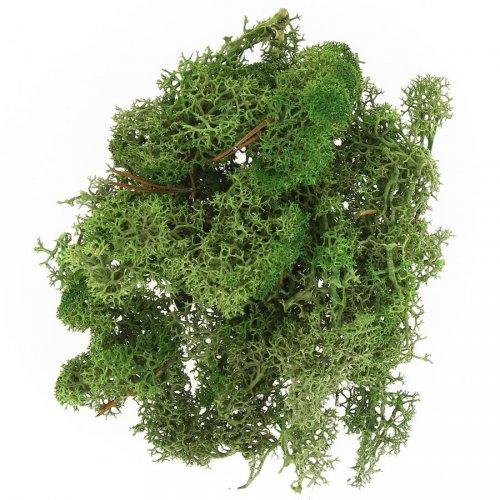 Mousse d Islande (30 g) - Vert