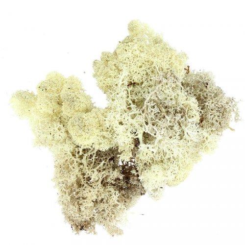 Mousse d Islande (30 g) - Blanc nature