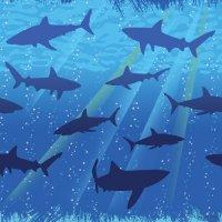 Contient : 1 x Nappe Requin