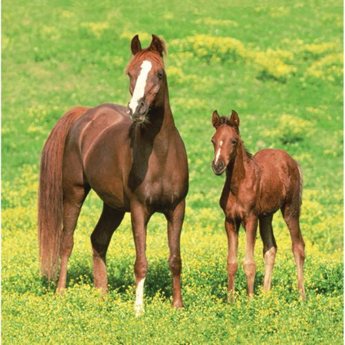 16 Serviettes Cheval Nature
