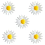5 Petites Marguerites Blanches à Coeur Jaune (4,5 cm) - Azyme