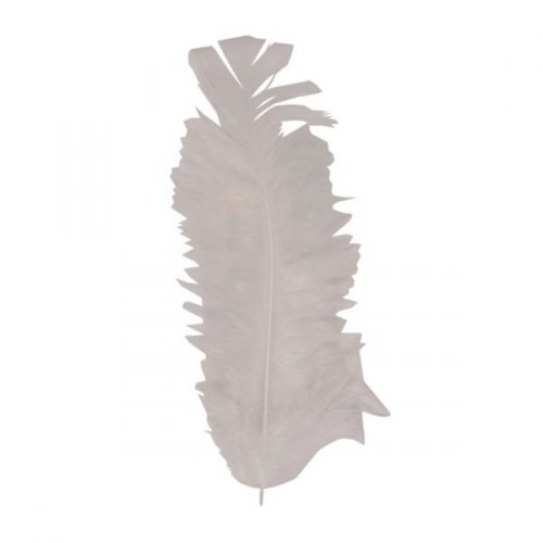 30 Plumes blanches