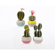 Mini Cactus Pot Blanc/Brut