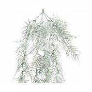 Branche Sapin Asperge enneigé (50 cm) - Plastique