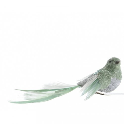 Oiseau Vert Eucalyptus sur Clip (14 cm)