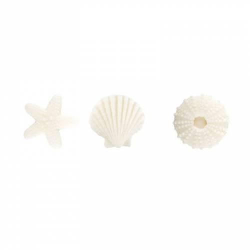 3 Assortiments de Coquillage Blanc - Sucre