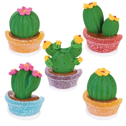 1 Cactus Sucre/Gélifié - 6 cm