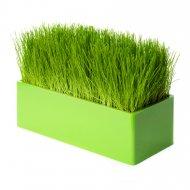 Fair Way vert, le chemin de table v�g�tal