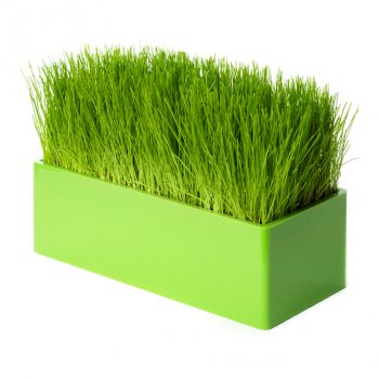 Fair Way vert, le chemin de table végétal