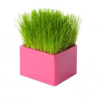 Mini Green rose, le mini carré de gazon