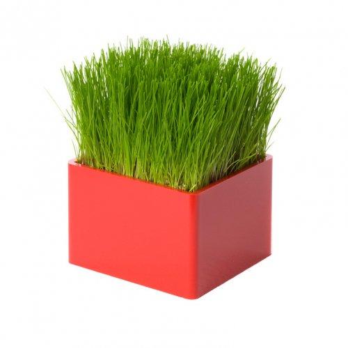 Mini Green rouge, le mini carré de gazon