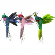 Clip Oiseau Tropical Vert