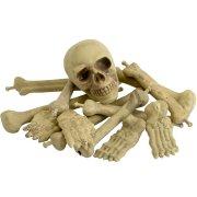 Ensemble Crâne, Os, Pieds et Mains
